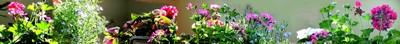 Bandeau Géraniums et autres plantes en pots