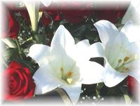 Photo bouquet de fleurs pour annoncer les décès sur le site.