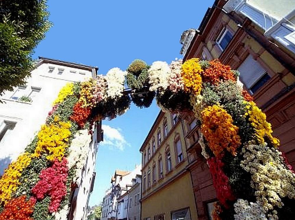 Lahr chrysanthèmes