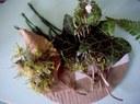 """Autre extrait d'une """"palette de peintre"""" créée après avoir ramassé des éléments naturels trouvés autour de la rivière (feuilles, fleurs, petites branches, herbes, fruits…)"""