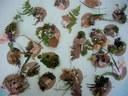 """Les élèves ont réalisé """"des palettes de peintre"""" en ramassant des éléments naturels trouvés autour de la rivière (feuilles, fleurs, petites branches, herbes, fruits…)"""