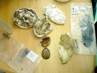 2013-04-04 CE1 - Plumes, empreintes, os, crottes ...