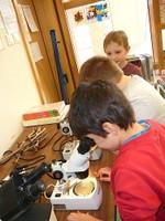 2013-04-05 CE1 - Les élèves observent les fleurs au microscope pour en faire un schéma