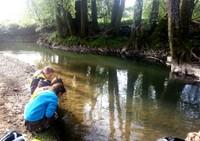 Observation de la vie de la rivière