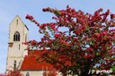 Le printemps sur la place Jeanne d'Arc à WALDIGHOFFEN