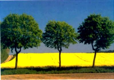 Les 3 arbres