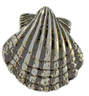 Coquille, symbole de Compostelle