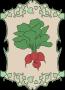 Tableau dessiné avec une botte de radis.