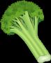 Dessin d'une fleur de brocolis.