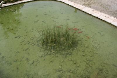 Bassin du site Lang vandalisé