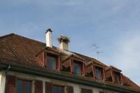 Cigogne sur le toit